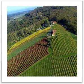 Buschenschank Weingut Bockmoar Wildon Murradweg R2