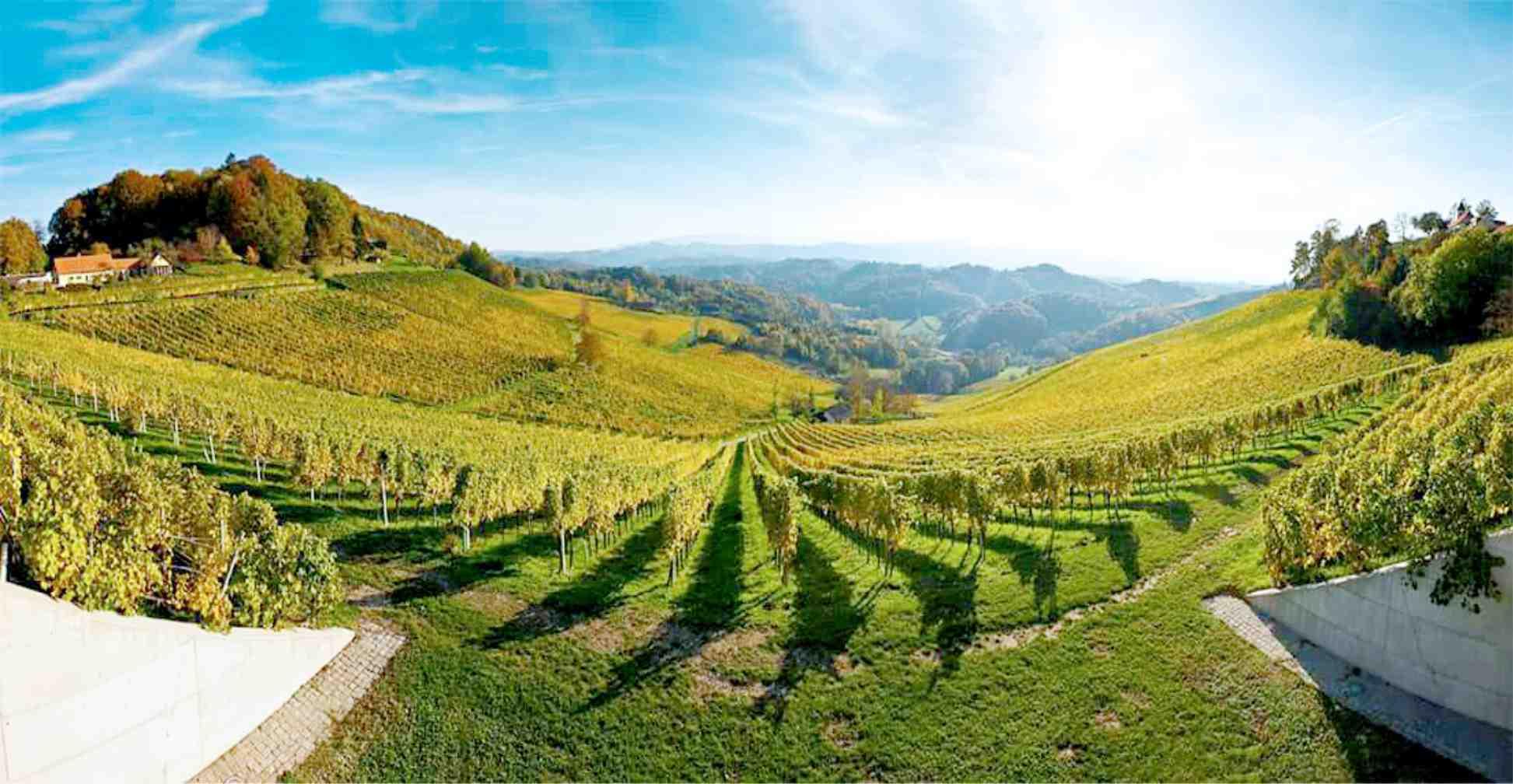 Weingut Tement Ausflugsziel Murradweg Weinstrassentour